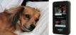 Гипертония у кошек и собак