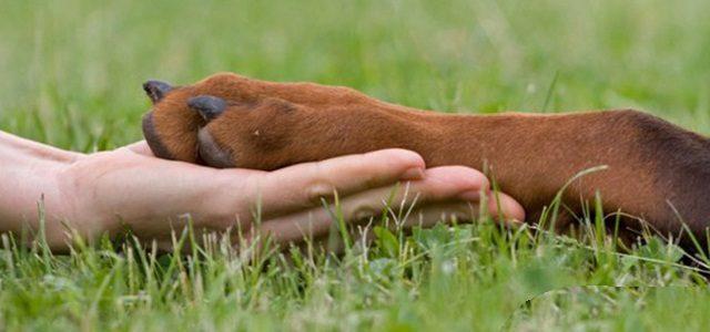 Лечение хромоты у мелких домашних животных