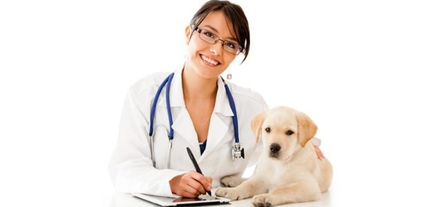 Консультация онлайн врача ветеринара