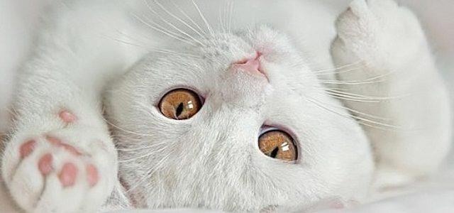 Стоимость стерилизации кошки