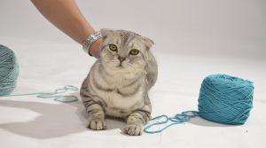 опасности для кошки