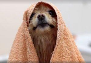 купание собак