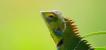 Лечение редких и экзотических животных