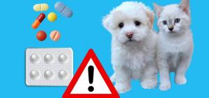 Опасные для животных лекарства