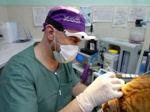 глазные операции животным Сумы