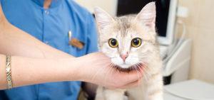 Профилактика лечения животных