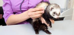 Терапия - лечение животных