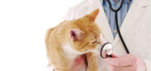 Признаки, при которых следует обращаться к ветеринару
