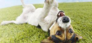 Нормальные физиологические реакции у собаки