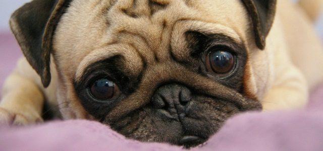 Советы ветеринарного офтальмолога