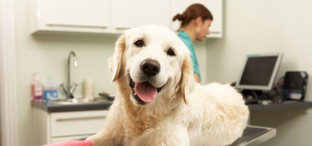 Ветеринарная лаборатория