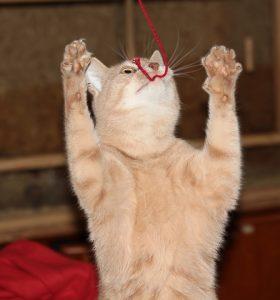 кошка и нитка