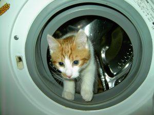 стиральная машина опасна для кошек