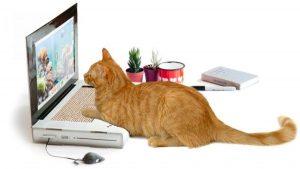 компьютерные игры для кошек