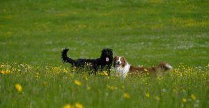 прогулка с собакой остюки