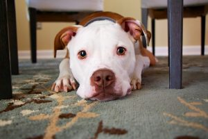 собака кастрация