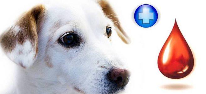 Мы ищем собак-доноров