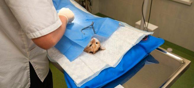 эзофагоскопия у животных
