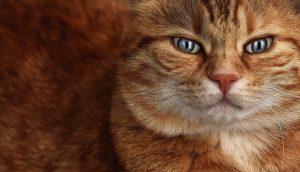 кастрация кота как сумы