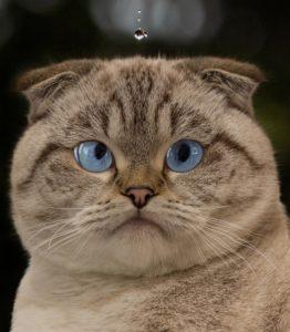 как заставить кота пить воду