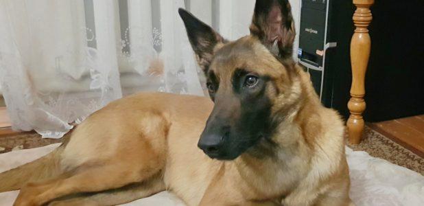 собака спасительница