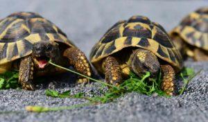 лечение черепах сумы