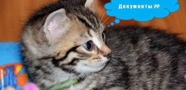 прививки животным