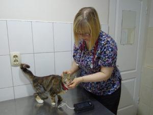 Измерение давления у кошки