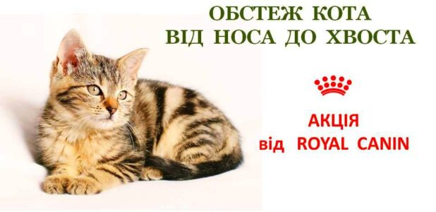 акция Royal Canin Сумы