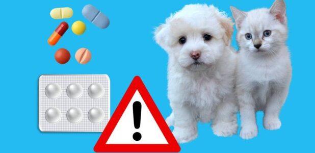 лекарства опасные для животных